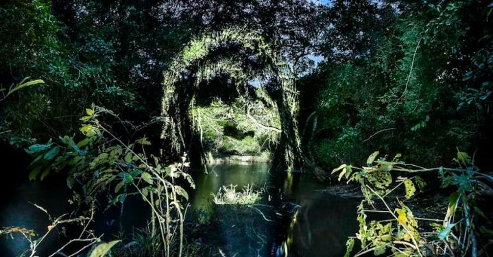 world-first-street-art-in-the-amazonian-rainforest-581ae8c8496d2__880